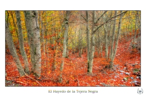 2014_11_16_Hayedo_Tejera_Negra_082