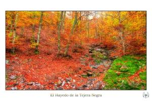 2014_11_16_Hayedo_Tejera_Negra_083